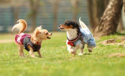 茨木市で犬と遊べる♪ドッグランまとめ【無料施設あり】